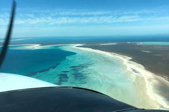 Monkey Mia Dolphins & Shark Bay Air Tour From Perth Logo and Images