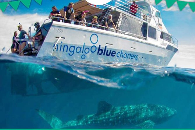 Swim with Whale Sharks or Humpback Whales - the largest fish in the world! Logo and Images