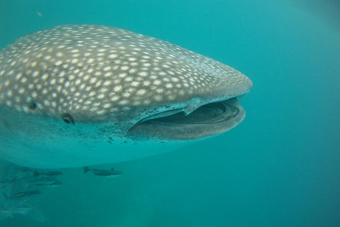 Deluxe WhaleShark Swim Tour on the Ningaloo Reef from Exmouth Logo and Images
