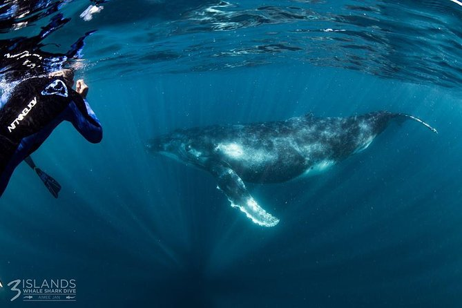 Swim with Humpback Whales - Ningaloo Reef - 3 Islands Whale Shark Dive Logo and Images