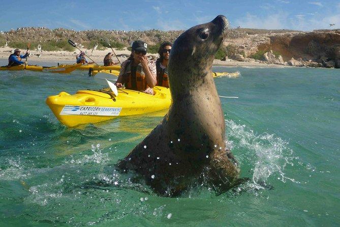 Penguin and Seal Island Kayak Tour Logo and Images