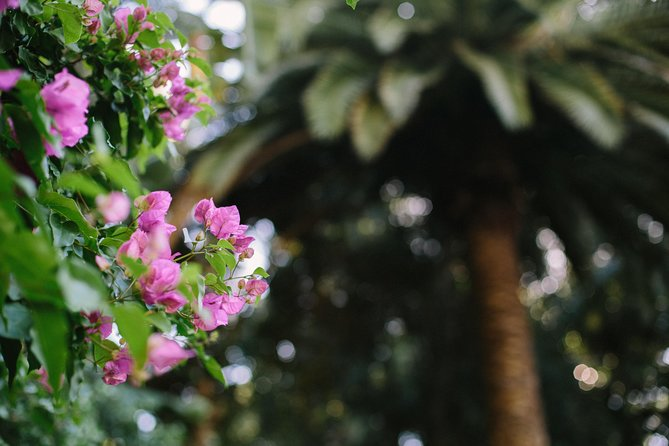 Wanneroo Botanic Gardens: Devonshire Tea and Garden Self Guided Tour Logo and Images