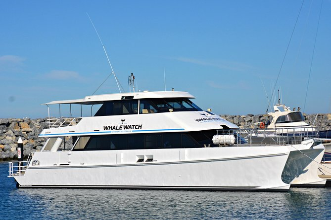 Whale-Watching Tour from Augusta or Perth with Optional Captain's Lounge Upgrade Logo and Images