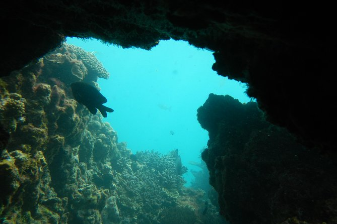 Half-Day Abrolhos Islands Shipwreck Air and Land Tour from Geraldton Logo and Images