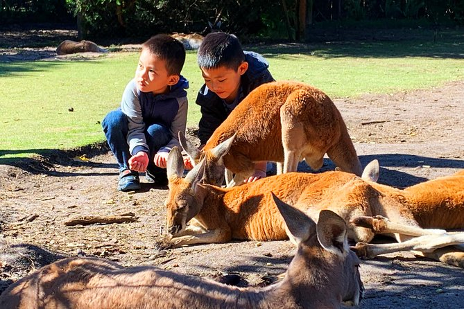 Perth Kids Explorer Tours Logo and Images