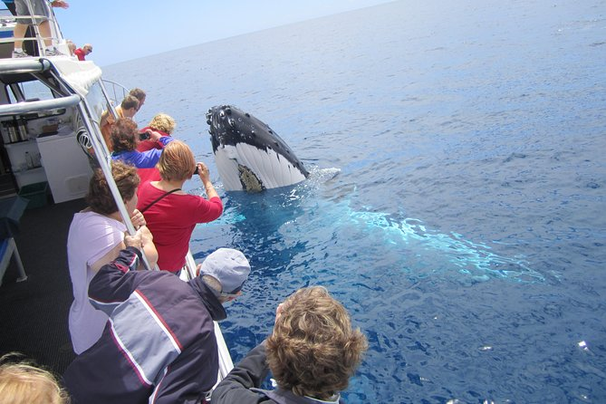 Busselton Whale Watching Eco Tour Logo and Images