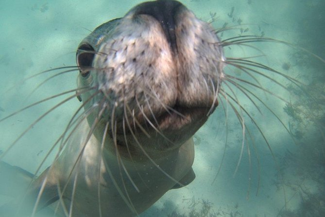 Snorkel and Visit the gorgeous Rottnest Island Logo and Images