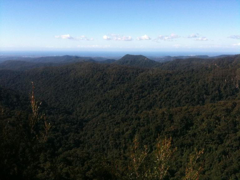 Springbrook National Park Discovery Full-Day Bushwalking Tour Logo and Images