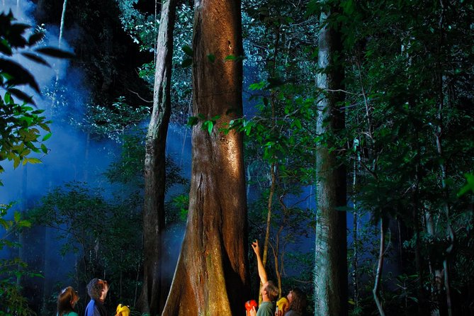 Daintree Rainforest Night Walk from Cape Tribulation Logo and Images