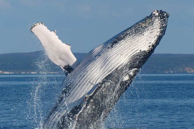 Spirit of Hervey Bay Whale Watching Cruise Logo and Images