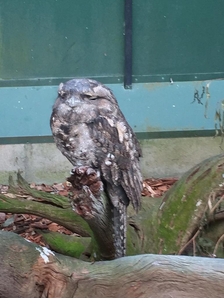 Wildlife Habitat Port Douglas Logo and Images