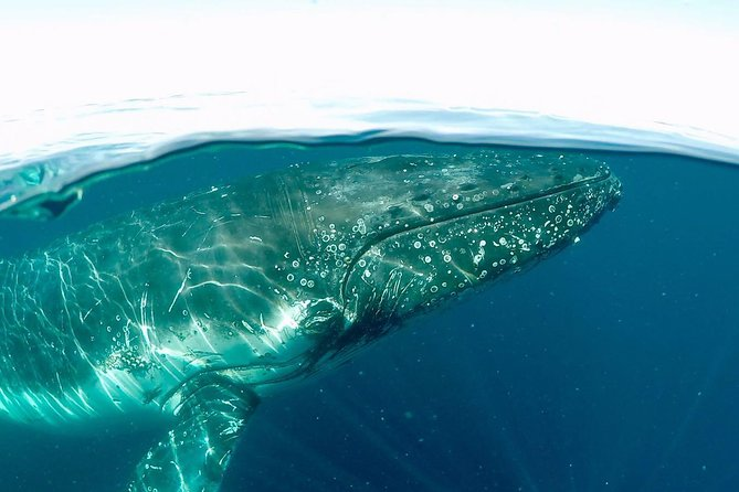 Whale Watching and Surfers Paradise Day Trip from Brisbane Logo and Images