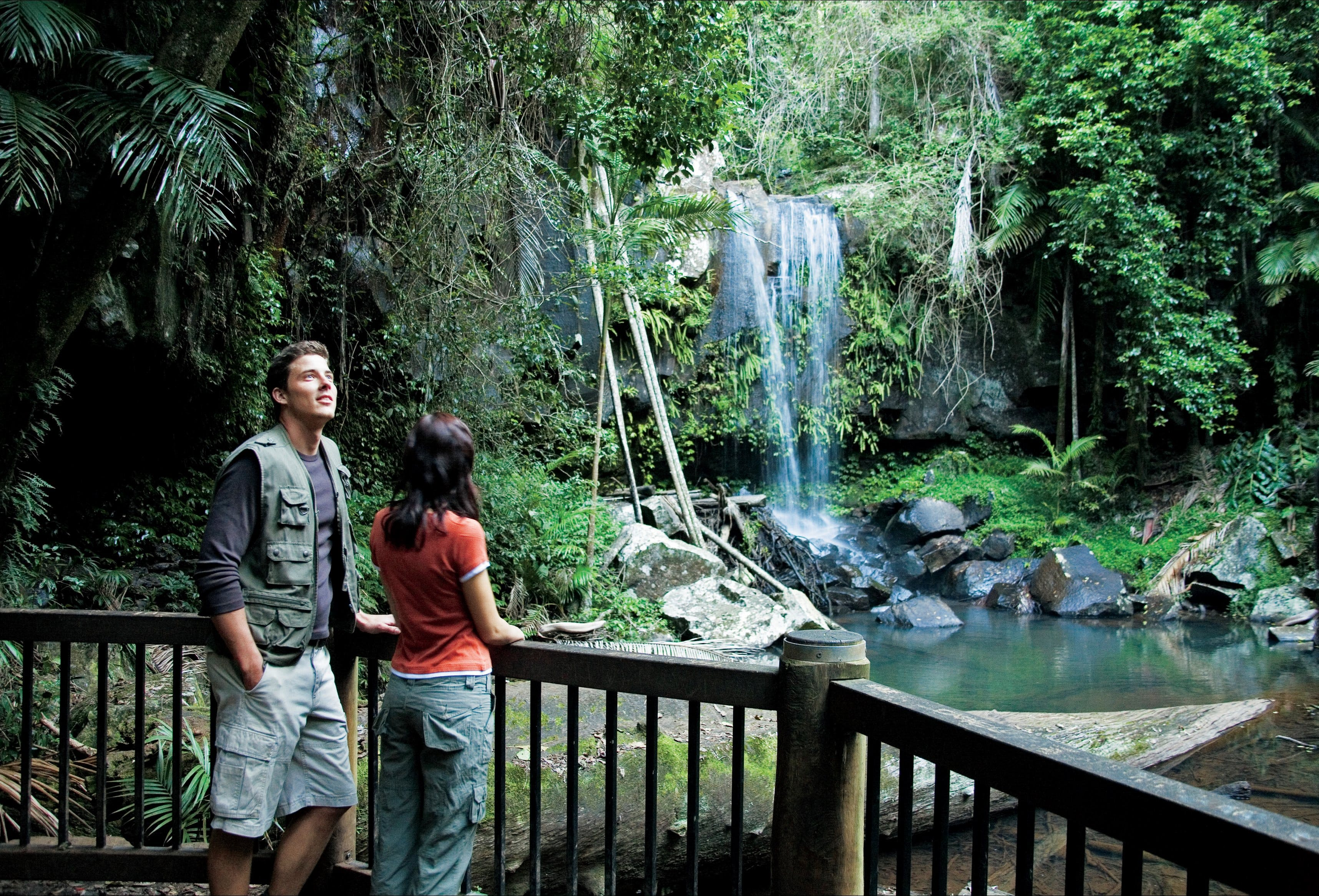 Curtis Falls track, Tamborine National Park Logo and Images