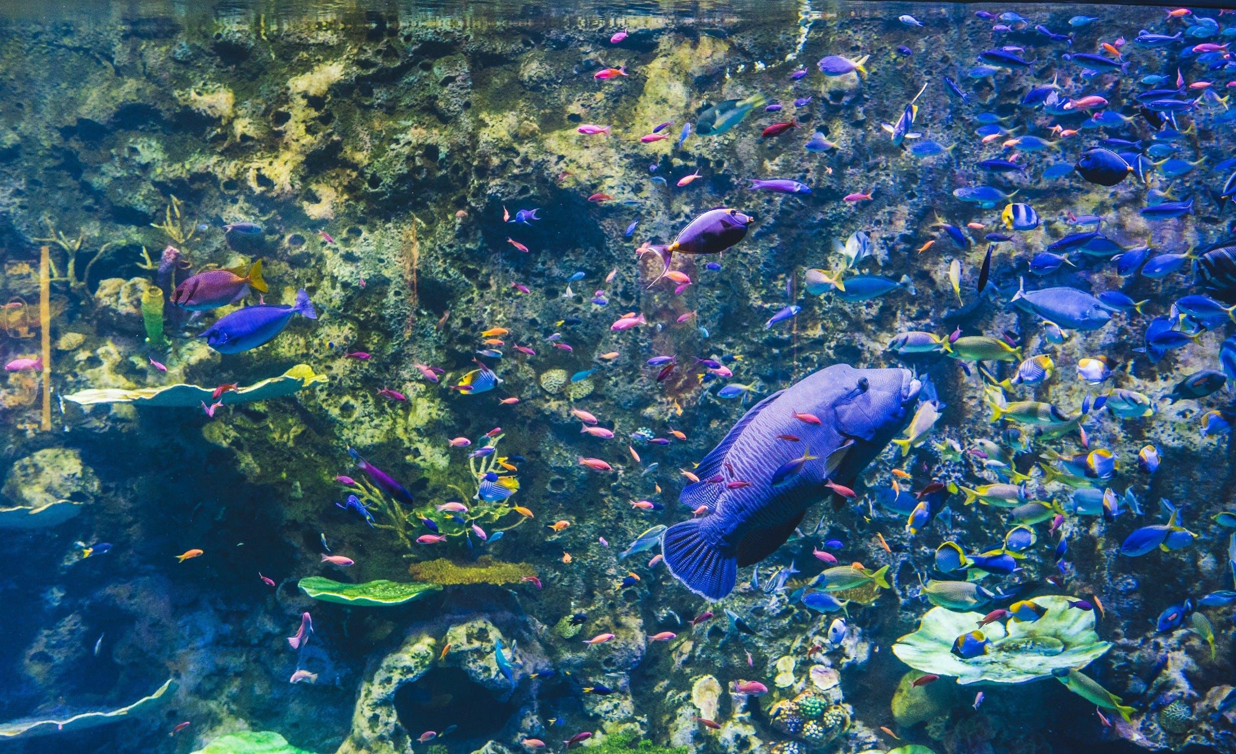 Cairns Aquarium Logo and Images