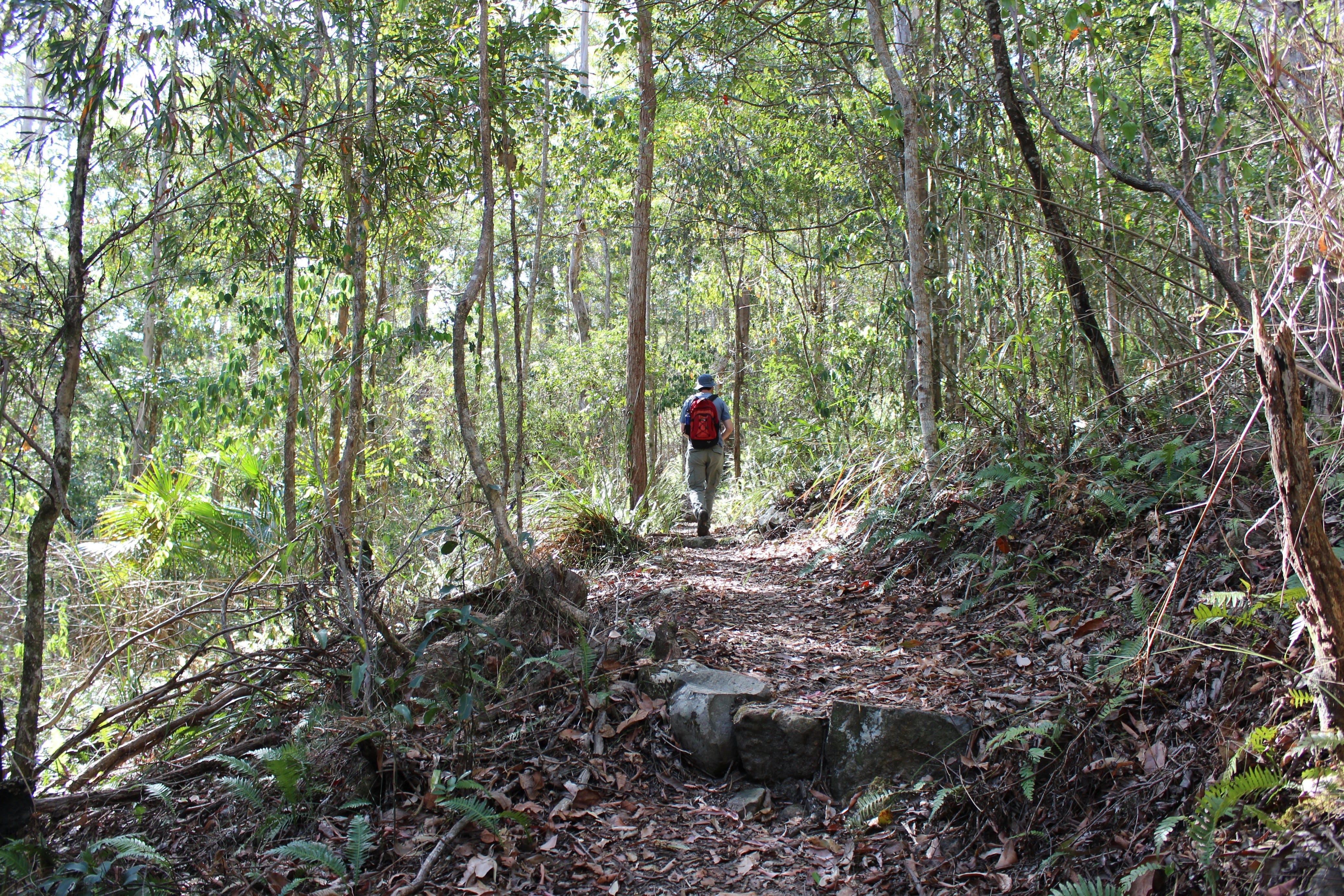 Morelia walking track, D'Aguilar National Park Logo and Images