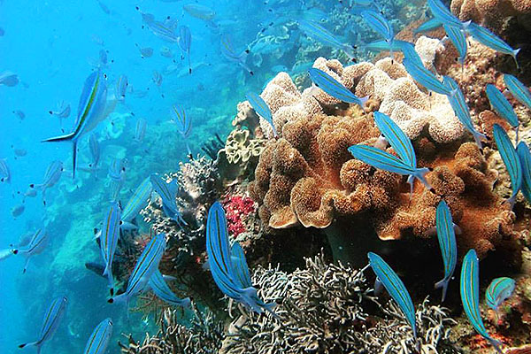 Ocean Free & Ocean Freedom - Cairns Premier Reef and Island Tours Logo and Images