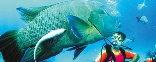 Aristocat Snorkel and Scuba Port Douglas