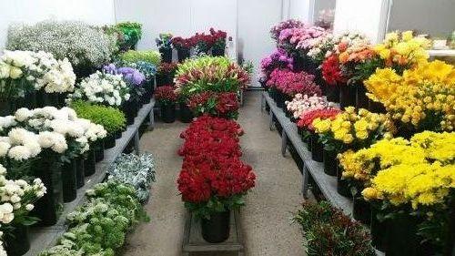Townsville Flower Market