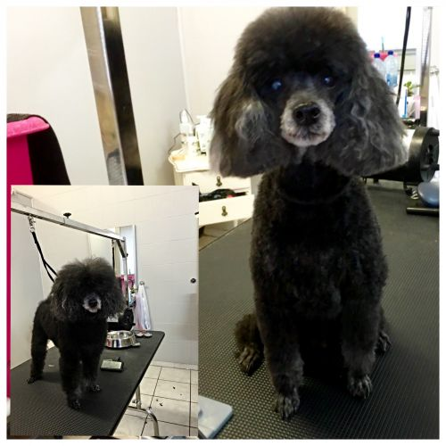 Aloha K9 Services Dog Grooming & Training