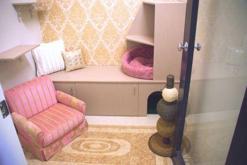 Luxury Cat Hotel