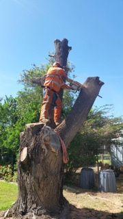 Treespec CQ