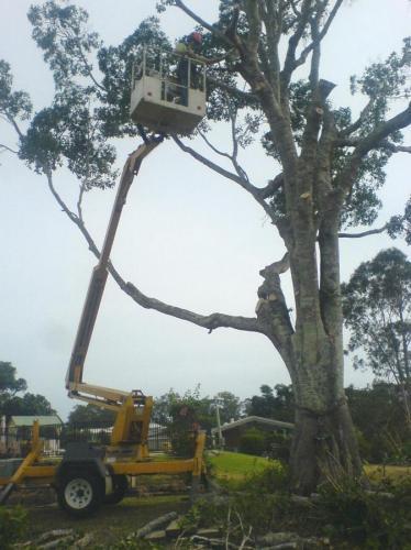D & M Tree Services