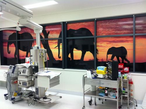 Extreme Glass Tinting Townsville