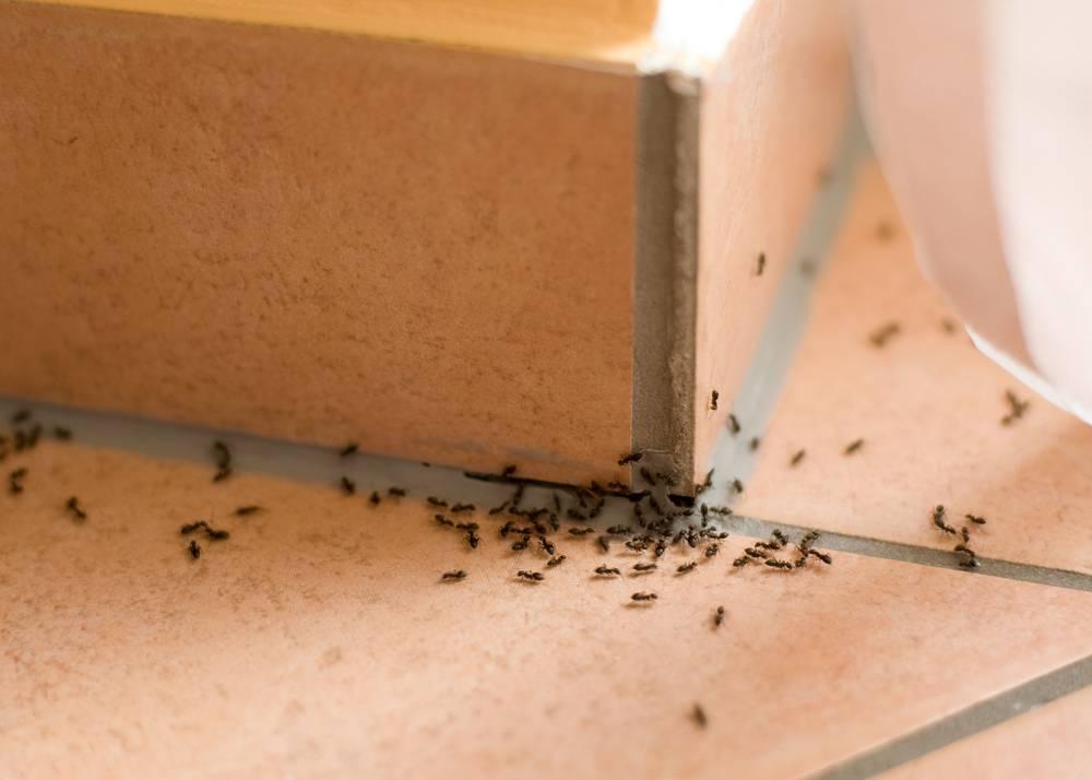 Nu-Style Carpets & Pest Control