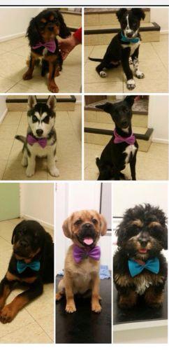Killarney Vale Veterinary Clinic Puppy Pre School