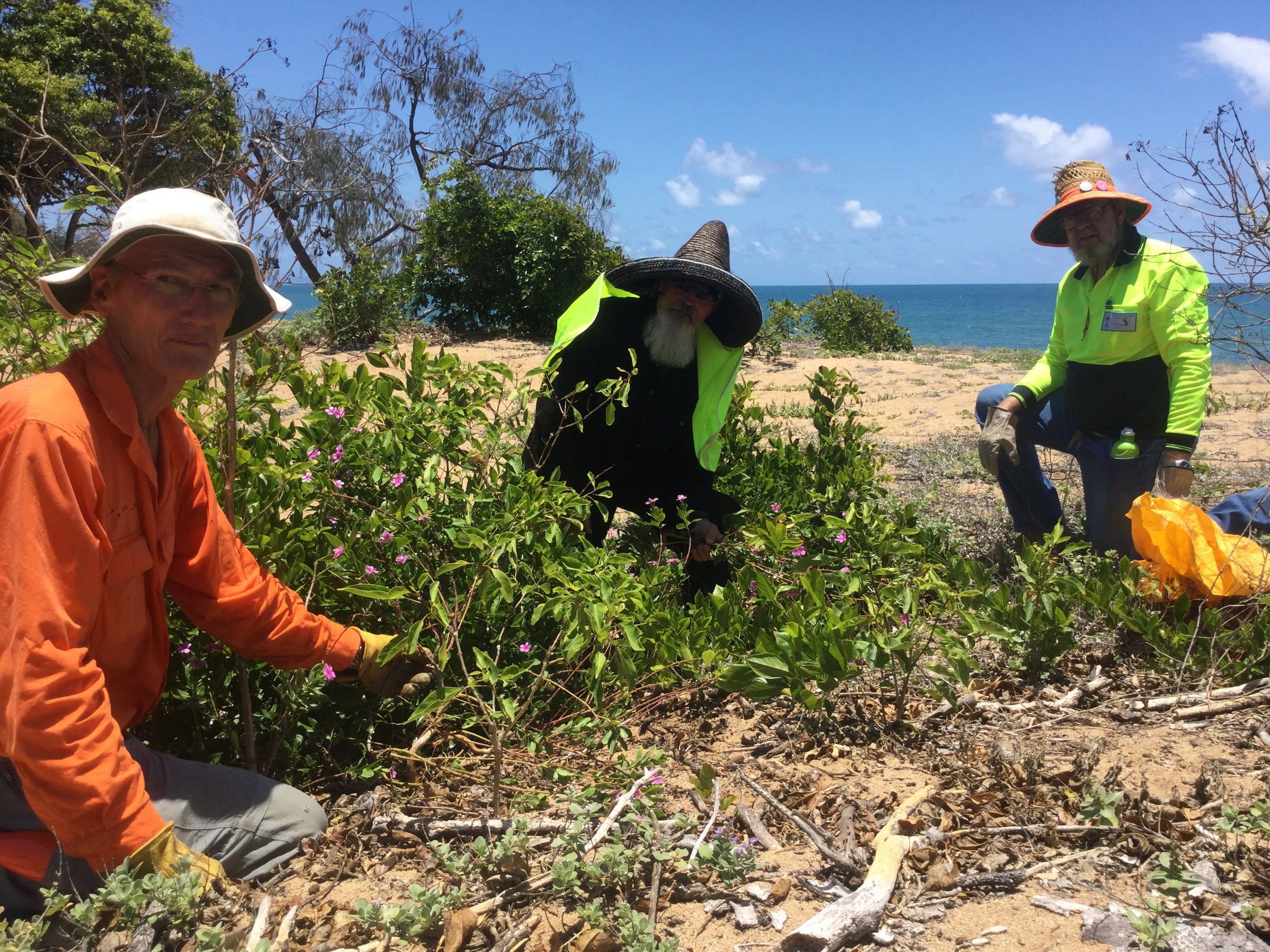 Conservation Volunteers Australia Townsville - Beach Scrub Conservation Logo and Images
