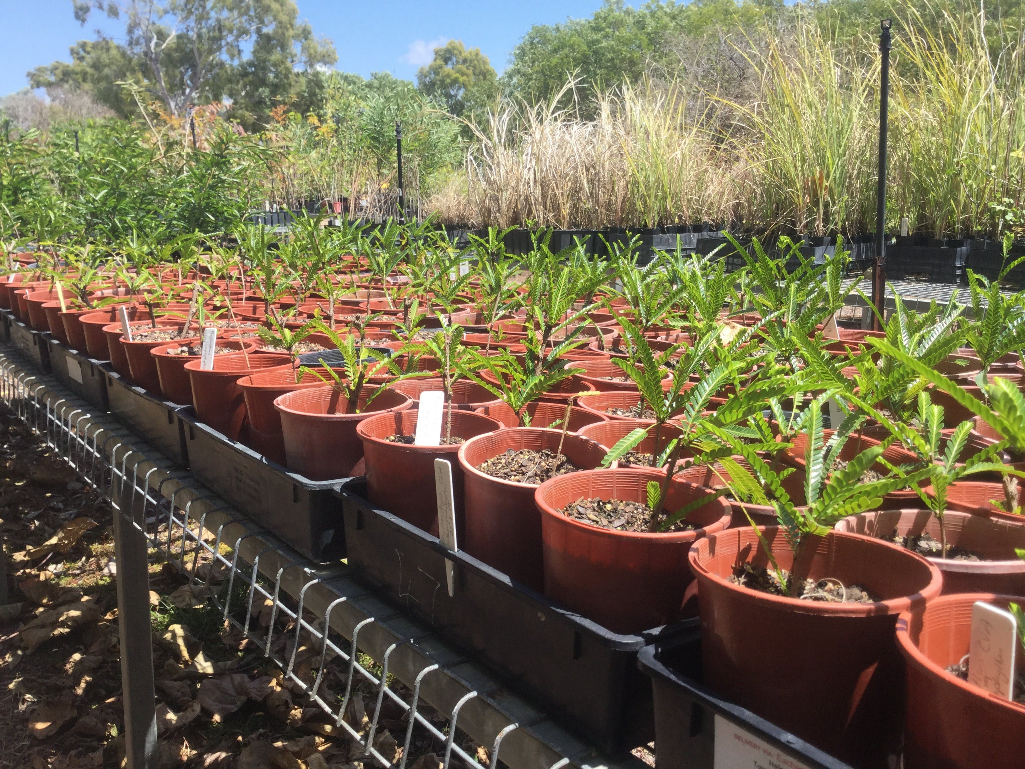 Conservation Volunteers Australia Townsville - Ocean View Nursery Logo and Images