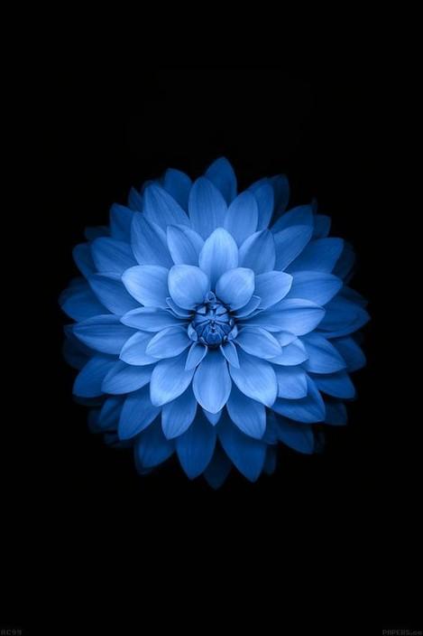 Blue Lotus Hair salon