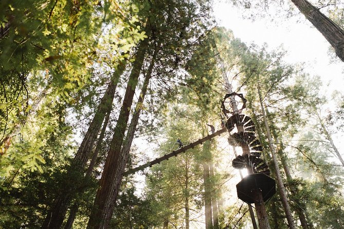 Muir Woods Zip Line and Private Wine Tour From San Francisco