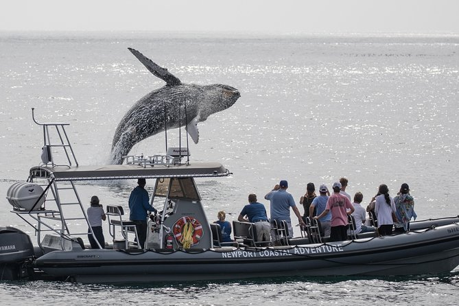 Ultimate Whale Watching Tour aboard the SuperRib- 15 Passenger Max