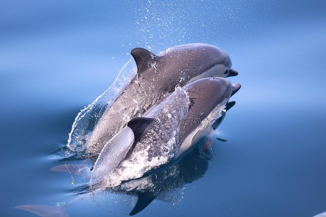 Dolphin and Whale Watching Sunset Cruise