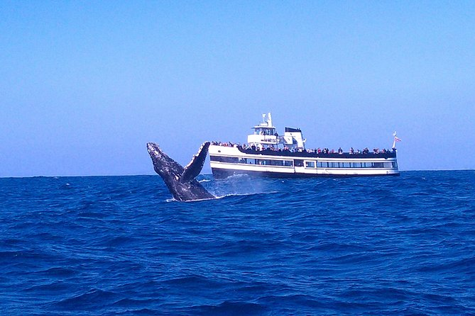 Whale Watching Cruise Guided by experts from Birch Aquarium