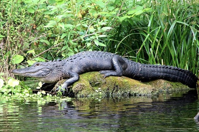 Private Tour Everglades Sightseeing at Big Cypress National Preserve