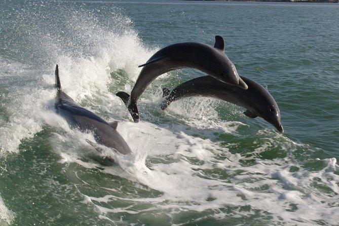 St. Pete Beach Dolphin Racer Speedboat Adventure
