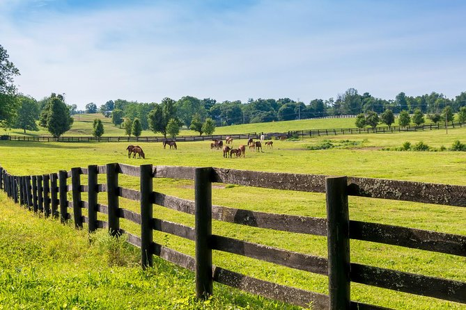Bluegrass Horse Melissa Farm Tour
