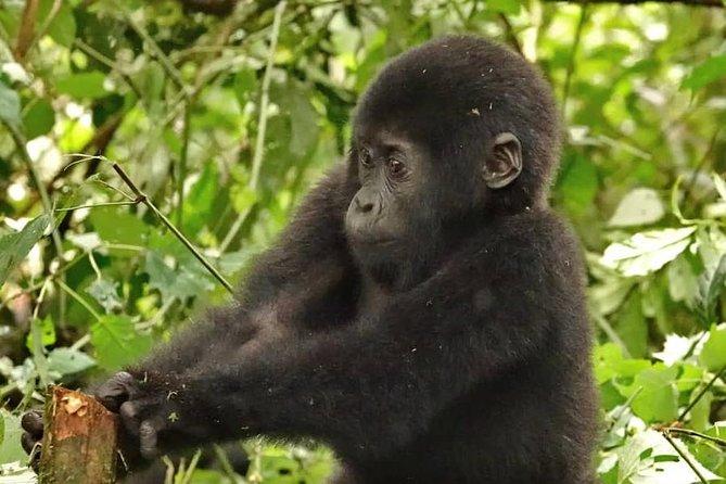 Birding safaris,Gorillas and wildlife safaris.
