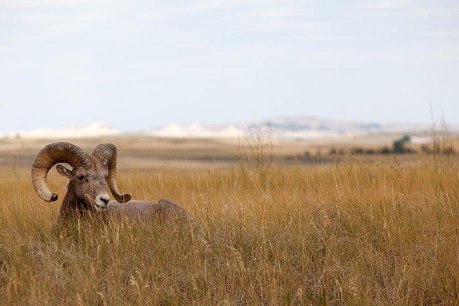 Badlands National Park Day Tour