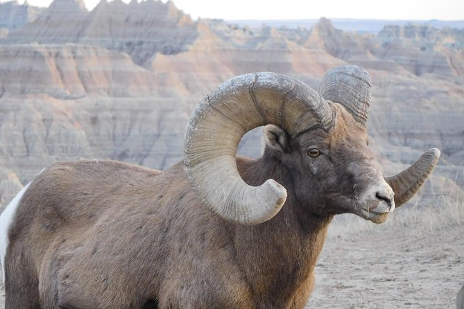 Badlands Tour with Local Experts