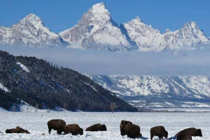 Wildlife Tour of Jackson Hole - Afternoon