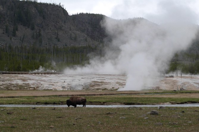 Private Yellowstone Lower Loop Tour