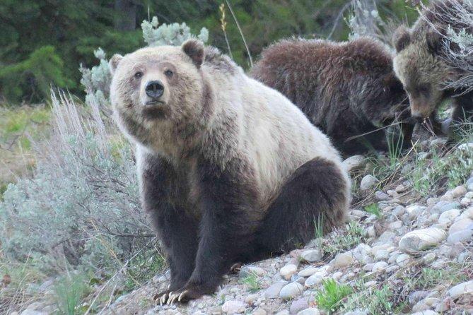 PRIVATE Grand Teton National Park Full-Day Tour