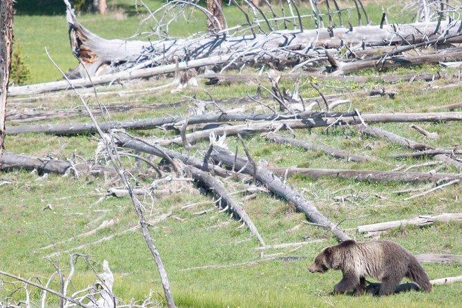 (Private) 2-Day Bear & Wolf Safari
