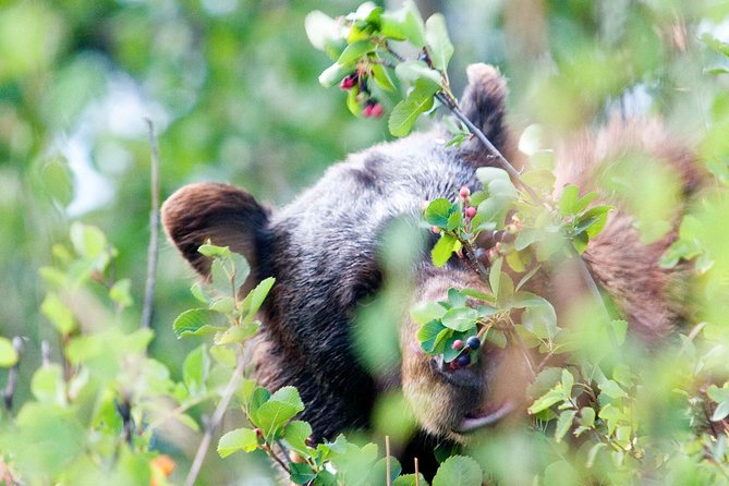2-Day Bear & Wolf Safari