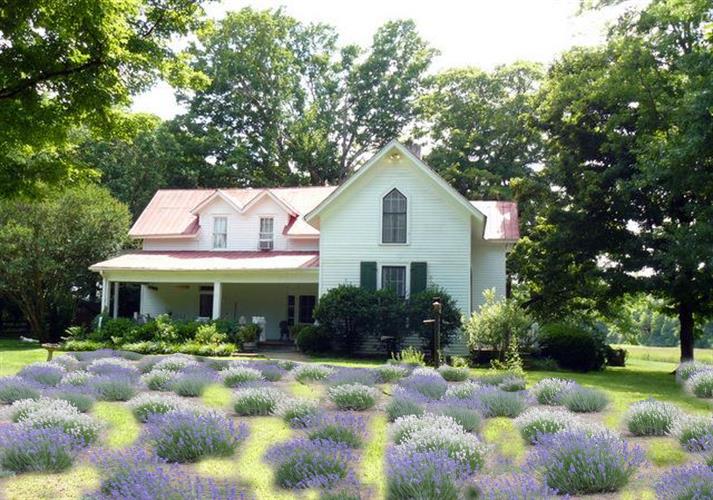 Mulberry Lavender Farm