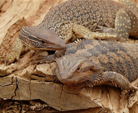 Alice Springs Reptile Centre Image