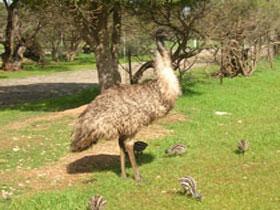 Minlaton Fauna Park Image